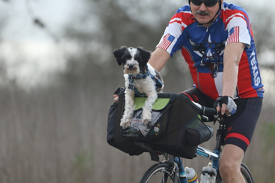 dog with cyclist