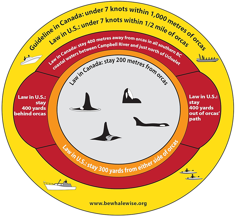 Info graphic communicating the rules around boating near killer whales.